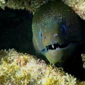Бали, под водой 11