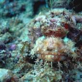 Бали, под водой 9