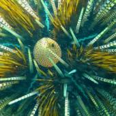 Бали, под водой 20