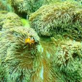 Бали, под водой 17