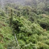 вьетнамские джунгли вид с канатной дороги