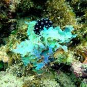 Бали, под водой 14